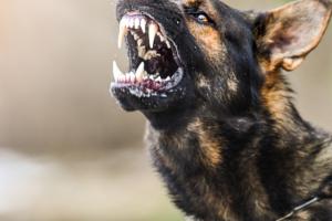 reaktiv hund