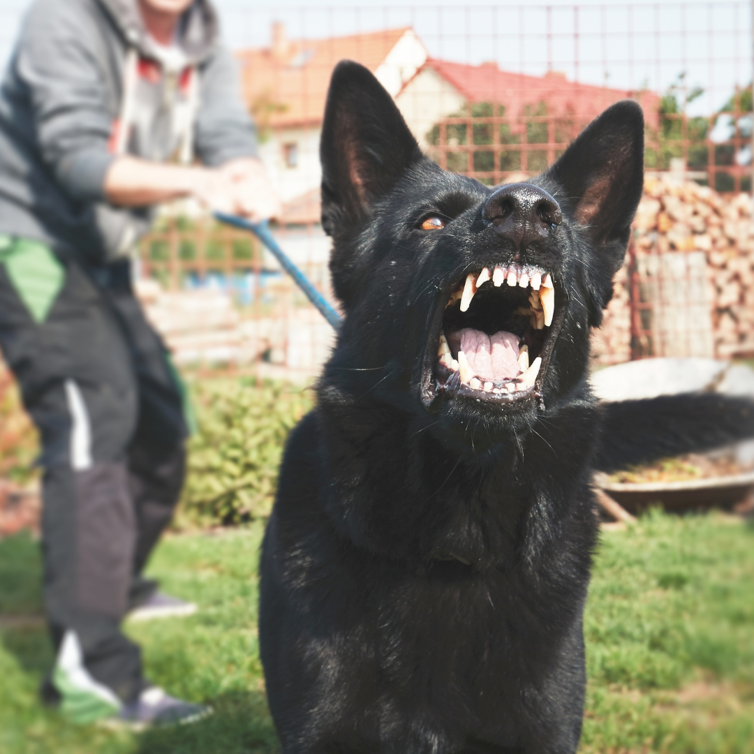 reaktivhund